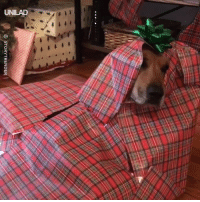 Christmas, Dank, and How To: STORYTRENDER If you've ever wanted to know how to wrap your dog for Christmas... Now you know 😂🎁