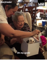 Birthday, Dank, and Family: Storytrender  LAD  BIBL E  Oh my gosh! Nadine was devastated when her service dog of 12 years passed away. So for her 96th birthday, her family did this for her 🐶😍