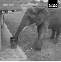 Dank, Elephant, and 🤖: STORYTRENDER  LAD  BIBL E This elephant was caught on CCTV picking up rubbish 😁🐘
