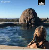 When an elephant decides to crash your pool party 😍: Storytrender  LAD  BIBL E When an elephant decides to crash your pool party 😍