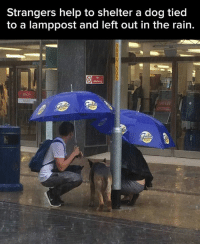 Dank, 🤖, and Dog: Strangers help to shelter a dog tied  to a lamppost and left out in the rain. There are some good people out there.