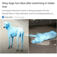 😨| Follow @aranjevi for more!: Stray dogs turn blue after swimming in Indian  river  Untreated industrial waste is being pumped into the  Kasadi River in Navi Mumbai, next to the Maharashtra st..  lm  Daily Mail 12 hours ago 😨| Follow @aranjevi for more!