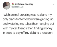 Friends, Money, and Animal: @ stream scenery  @peachi_95  i wish animal crossing was real and my  only plans for tomorrow were getting up  and watering my tulips then hanging out  with my cat friends then finding money  in trees to pay off my debt to a raccoon Animal crossing