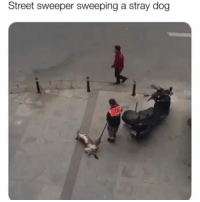 Definition of the good life | Follow @cuteandfuzzybunch 👈 for the best animal memes!: Street sweeper sweeping a stray dog Definition of the good life | Follow @cuteandfuzzybunch 👈 for the best animal memes!