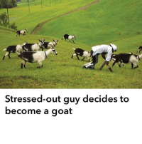 Currently debating this option (@moistbuddha): Stressed-out guy decides to  become a goat Currently debating this option (@moistbuddha)