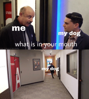 Dank, Meme, and Memes: STUDI  me  my dog  what is in your mouth  MEME TEPLATE BY aSSUDufFy  my do  be new format? by diddy_waifu MORE MEMES