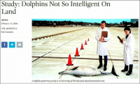 Charm like a works: Study:  Dolphins Not So Intelligent On  Land  NEWS  February 15, 2006  VOL 48 ISSUE 14  Environment  A dolphin performs poorly in a University of Florida land-based locomotion test. Charm like a works