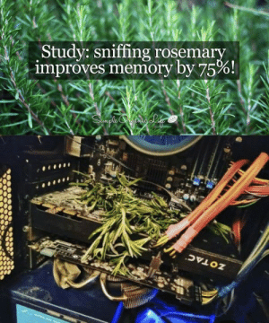 Memory, Rosemary, and Study: Study: sniffing rosemary  improves memory by 75%!