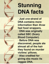 DNA is simply astonishing.  What DNA fact amazes you?: Stunning  DNA facts  Just one strand of  DNA contains more  information than three  fast food wrappers.  DNA was originally  called SBC (Scary  Blood Computer).  Before DNA was  discovered, people ate  almost all of the hair  they found on murder  victims' pillows.  Also credited for  giving ska music its  reggae DNA. DNA is simply astonishing.  What DNA fact amazes you?