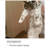 He looks so ashamed wow ~Michaela •••••••••••••••••••••••••••••••••••• TAGS TAGS TAGS TAGS TAGS tumblrtextpost tumblrposts textpost tumblr shrek instatumblr memes posts phan funnythings 😂 same funny haha loltumblr lol relatable rarepepe funnythings funnytextposts pepeislife meme funnystuff pepe food spam (follow our backup @plshelpimabackup ): stunning picture:  The box wasn't empty He looks so ashamed wow ~Michaela •••••••••••••••••••••••••••••••••••• TAGS TAGS TAGS TAGS TAGS tumblrtextpost tumblrposts textpost tumblr shrek instatumblr memes posts phan funnythings 😂 same funny haha loltumblr lol relatable rarepepe funnythings funnytextposts pepeislife meme funnystuff pepe food spam (follow our backup @plshelpimabackup )