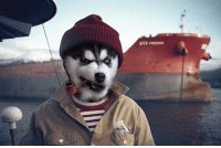 Such pirate doge: STX FREESa  o Such pirate doge