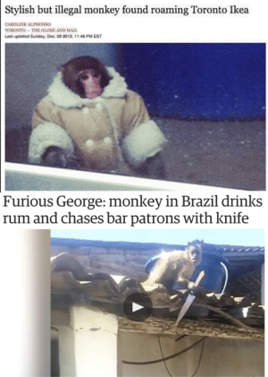 Gay culture in two photos.: Stylish but illegal monkey found roaming Toronto Ikea  CAROLINE ALPHONSO  TORONTO-THE GLOBE AND MAII  Last updated Sunday, Dec. 09 202, 11:46 PM EST   Furious George: monkey in Brazil drinks  rum and chases bar patrons with knife Gay culture in two photos.