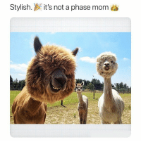 Funny, Goals, and Hair: Stylish.  it's not a phase mom Hair goals (Swipe for more)