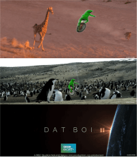 """Dank, Meme, and Saw: SUBSCRIBE  D A T B O II  BBC  earth  A BBC Studios Natural History Unit production, co-produced  SUBSCRIBE <p>in 2016, dat boi transformed how we saw the natural world via /r/dank_meme <a href=""""http://ift.tt/2dSfNhQ"""">http://ift.tt/2dSfNhQ</a></p>"""