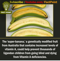 Children, Memes, and youtube.com: Subscribe : Youtube.com/FactPoint  FACT POINT  The 'super-banana,' a genetically modified fruit  from Australia that contains increased levels of  vitamin A, could help prevent thousands of  Ugandan children from going blind and dying  from Vitamin A deficiencies. factpoint Subscribe to our YouTube channel: Youtube.com-factpoint Sources mentioned here : fact point.info Posted By Admin : @TheAmitBaghel