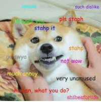 such dislike  pls staph  stahp it  stahp  not wow  anno  very unamused  an, what you do?  shibesforlife Much annoy. Very unamused