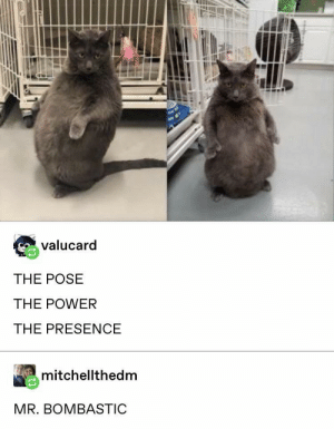 Such grace, such poise by VoiceOverKill MORE MEMES: Such grace, such poise by VoiceOverKill MORE MEMES
