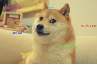 Doge, Memes, and Nascar: such nascar  Wow  much doge  so fast  more monies  many happy