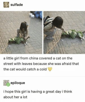 https://t.co/dj61q37Qbj: sulfade  a little girl from china covered a cat on the  street with leaves because she was afraid that  the cat would catch a cold  epiloque  i hope this girl is having a great day i think  about her a lot https://t.co/dj61q37Qbj