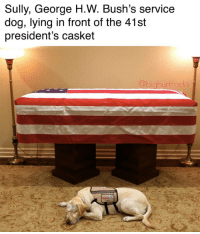 Not the dog!!! 😂😂😂💀💀💀  Credit - @bighurtrocks https://t.co/qEeUrwQJON: Sully, George H.W. Bush's service  dog, lying in front of the 41st  president's casket  hurtrocks Not the dog!!! 😂😂😂💀💀💀  Credit - @bighurtrocks https://t.co/qEeUrwQJON