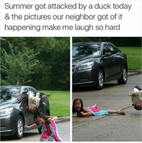 Summer, Duck, and Pictures: Summer got attacked by a duck today  & the pictures our neighbor got of it  happening make me laugh so hard hi