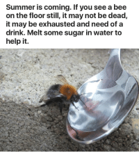 PSA!!!! save the bees!!! 🐝💧 https://t.co/Nhe4PDZCXs: Summer is coming. If you see a bee  on the floor still, it may not be dead,  it may be exhausted and need of a  drink. Melt some sugar in water to  help it. PSA!!!! save the bees!!! 🐝💧 https://t.co/Nhe4PDZCXs