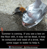 Summer Is Coming: Summer is coming. If you see a bee on  the floor still, it may not be dead, it may  be exhausted and need of a drink. Melt  some sugar in water to help it.  /didyouknowpagel  J @didyouknowpage