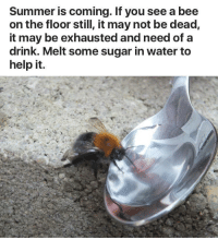 <p>Save the 🐝</p>: Summer is coming. If you see a bee  on the floor still, it may not be dead,  it may be exhausted and need of a  drink. Melt some sugar in water to  help it. <p>Save the 🐝</p>