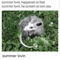 Ass, Scream, and Summer: summer lovin, happened so fast  summer lovin, he scream at own ass  summer lovin
