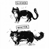 Memes, Winter, and Summer: SUMMER  ri  WINTER  1.18.19  HANNAH HilLAn My winter bod is in full force