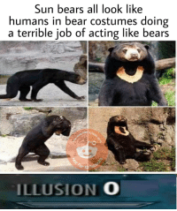 Bear, Bears, and Acting: Sun bears all look like  humans in bear costumes doing  a terrible job of acting like bears  ILLUSION O