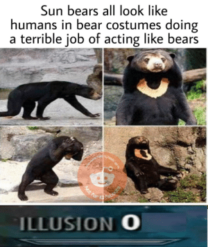 Dank, Memes, and Target: Sun bears all look like  humans in bear costumes doing  a terrible job of acting like bears  ILLUSION O You cant fool me Stewart by ClassicDecimus12 MORE MEMES