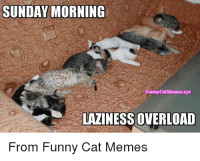 Sunday morning laziness overload    MOL   #cats Good Morning All, have a wonderful Sunday: SUNDAY MORNING  FunnyCatMemes.xyz  LAZINESS OVERLOAD  From Funny Cat Memes Sunday morning laziness overload    MOL   #cats Good Morning All, have a wonderful Sunday