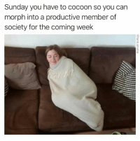 Funny, Sunday, and Caterpillar: Sunday you have to cocoon so you can  morph into a productive member of  society for the coming week I am a caterpillar