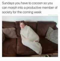 Funny, Tank, and Sinatra: Sundays you have to cocoon so you  can morph into a productive member of  society for the coming week  @tank.sinatra This is a rule