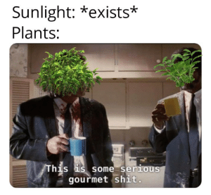 Did someone say PHOTOSYNTHESIS? via /r/memes https://ift.tt/2HZwBnf: Sunlight: *exists*  Plants:  This is some serious  gourmet shit. Did someone say PHOTOSYNTHESIS? via /r/memes https://ift.tt/2HZwBnf