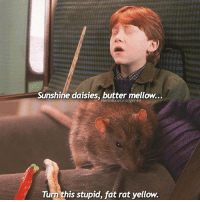 Memes, 🤖, and Rat: Sunshine daisies, butter mellow...  HermioneGranger44  Turn this stupid, fat rat yellow. What is the last film you watched at the cinemas? - For me it was beautyandthebeast 🌹 - deathlyhallows danielradcliffe rupertgrint emmawatson hogwarts harrypotter hermionegranger harrypotterscenes lunalovegood cursedchild fantasticbeasts fantasticbeastsandwheretofindthem