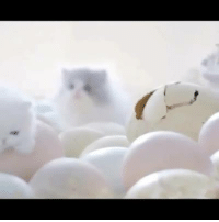 Super cute kittens hatching out of the eggs :)  Try not to have an AWW moment ;): Super cute kittens hatching out of the eggs :)  Try not to have an AWW moment ;)