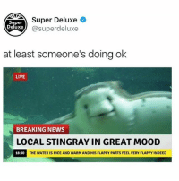 Friends, Funny, and Mood: Super  Deluxe  Super Deluxe +  xe@superdeluxe  at least someone's doing ok  LIVE  BREAKING NEWS  LOCAL STINGRAY IN GREAT MOOD  18:30  THE WATER IS NICE AND WARM AND HIS FLAPPY PARTS FEEL VERY FLAPPY INDEED Finally some good news from our friends @superdeluxe. Follow them for amazing original content 🔥