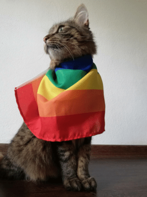 supermodelcats:  my beautiful son being a lgbt ally: supermodelcats:  my beautiful son being a lgbt ally