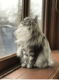 Tumblr, Blog, and Com: supermodelcats:  Watching the squirrels