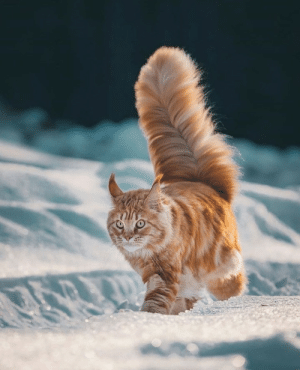 supermodelcats:  Will Ginger's tail ever stop growing?!: supermodelcats:  Will Ginger's tail ever stop growing?!