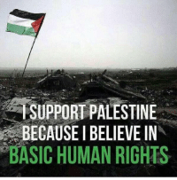 Memes, Israeli, and Terrorism: SUPPORT PALESTINE  BECAUSEIBELIEVE IN  BASIC HUMAN RIGHTS Unite against Israeli Terrorism! Support #Palestine.  I do support Palestine