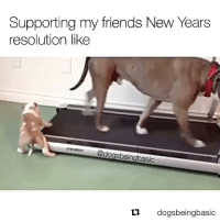 Tag a friend who's helping you with your NewYears goals! 💪💯@DogsBeingBasic WSHH: Supporting my friends New Years  resolution like  dogsbeingbasic  ti.  dogsbeingbasic Tag a friend who's helping you with your NewYears goals! 💪💯@DogsBeingBasic WSHH