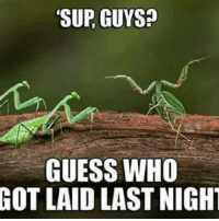 Worth it. Follow @9gag 9gag mantis: SUR GUYS?  GUESS WHO  GOT LAID LAST NIGHT Worth it. Follow @9gag 9gag mantis