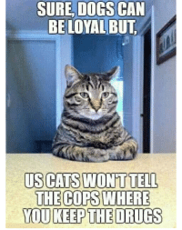 Cats, Dogs, and Drugs: SURE, DOGS CAN  BELOYALBUT  US CATS WONT TELL  THE COPS  YOU KEEP THE DRUGS  WHERE