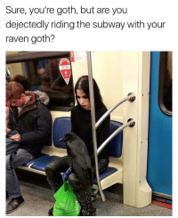 Memes, Subway, and Free: Sure, you're goth, but are you  dejectedly riding the subway with your  raven goth?  FREE  MI im catching up on all of my shows👅👅👅