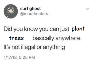 More of the best memes at http://mountainmemes.tumblr.com: surf ghost  @moutheaters  Did you know you can just plant  basically anywhere.  trees  It's not illegal or anything  1/17/18, 5:25 PM More of the best memes at http://mountainmemes.tumblr.com