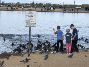 Was just a suggestion anyway.: SURPRISE  ARIZONA  LAKE HO U RS  6:00 AM  TO  1 0:00 PM  NO LITTERING.  PLEASE DO NOT WADE OR  SWIM IN LAKE.  PLEASE KEEP PETS OUT OF LAKE.  PLEASE DO, NOT FEED  THE DUCKS& GEESE  ipers  PLAS Was just a suggestion anyway.