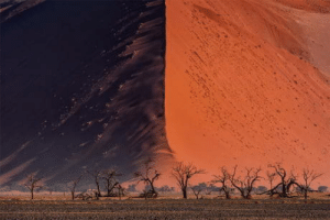 Surreal trees and giant sand dune: Surreal trees and giant sand dune